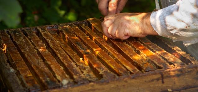 Мы бережно обращаемся с нашими пчелами